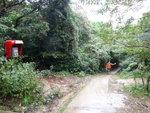 緊急電話旁小路可上大蚊山 DSC06467