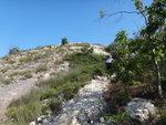 青山南脊初段還時有樹蔭, 再前便秃頭晒 DSC09038