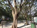 經楊小坑錦簇公園 DSC00006