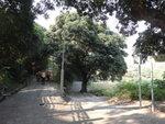石門甲道右邊有一小路可往莫家村 DSC01098