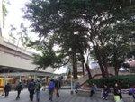 穿竹園廣場, 可以在此找地方鬆一鬆, 方一方便 DSC01502