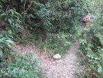 中途左邊有條支路, 唔知去邊哩 DSC02135