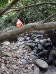 樹下穿過回入澗中 DSC02153