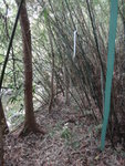 右邊有山路穿竹林過 DSC02366