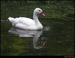 bird 05s