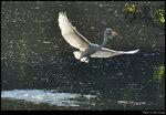 bird_20201107_01s