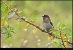 bird_20200927_01s
