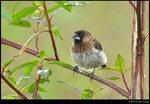 bird_20200927_03s