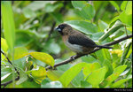 bird_20210411_08s