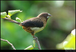bird_20210411_09s