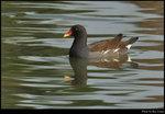 bird_20200310_09s