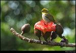 bird_20200217_11s