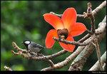 bird_20200308_03s