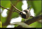 bird_20210218_09s