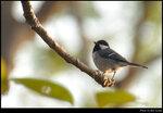 bird_20210218_10s