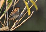bird_20210206_05s