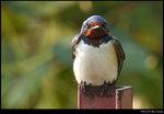 bird_20200217_03s