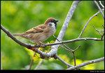 bird_20200224_04s