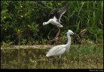 bird_20210502_05s