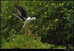 bird_20210502_06s