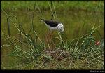 bird_20210502_07s