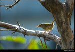 bird_06s