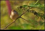 bird_20210218_08s