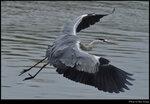 bird_20201213_01s
