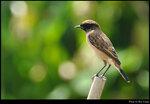bird_20201002_03s