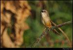 bird_20200310_10s