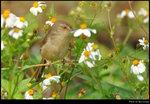 bird_20210220_02s