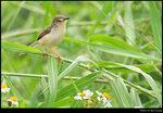 bird_20210328_09s