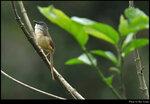 bird_20210418_02s