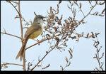 bird_20210425_07s