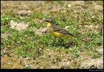 bird_20201010_07s
