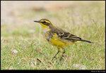 bird_20210328_05s