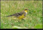 bird_20210328_06s
