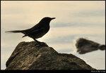 bird_20201025_02s