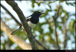 bird_20201025_04s
