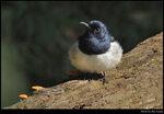 bird_20201110_08s