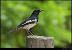 bird_20210404_02s