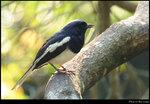 bird_20210410_06s