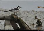 bird_20201213_09s