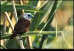 bird_20201108_07s