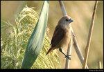 bird_20201108_12s