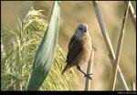 bird_20201108_13s