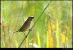 bird_20201107_10s