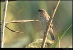 bird_20201108_17s
