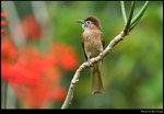 bird_20200308_01s
