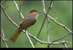 bird_20210418_05s